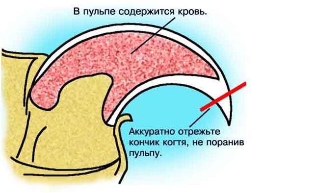 Можно по анализу крови определить свинку платный анализ крови в москве свао